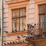 ISOTRONIC anti-oiseaux et mobile Lot de 2 Oiseau Répulsif ultrason colombe Pigeon de protection contre oiseaux et les mouettes sur balcon gouttière de fenêtre arbres fruitiers les Vergers de la marque ISOTRONIC image 2 produit