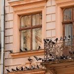 ISOTRONIC anti-oiseaux Piles et mobile Oiseau Répulsif ultrason Répulsif colombe colombe Pigeon de protection contre pigeons oiseaux et les mouettes sur balcon gouttière de fenêtre arbres fruitiers les Vergers Carport anti-oiseaux la épouvantail avec präv image 1 produit