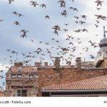 ISOTRONIC Répulsif ultrason Anti Oiseaux Pigeon Colombe pour éloigner les Animaux Nuisibles de votre Jardin sur balcon gouttière de fenêtre arbres fruitiers Lot de 3 de la marque ISOTRONIC image 2 produit