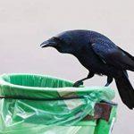 ISOTRONIC répulsif pigeon oiseau SCHRECK anti-oiseaux Répulsif Anti-animaux–Oiseaux Colombes Moineaux corbeaux mouettes vertreiben de la marque Isotronic image 4 produit