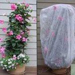 Le drap de protection en polaire pour les plantes et cultures du jardin Contre les insectes et le gel de la marque Bestvaluethings image 3 produit