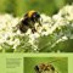 Le Jardin secret des insectes de la marque Michel Gaudichon image 3 produit