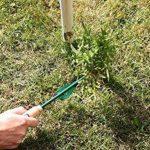 mauvaises herbes pelouse TOP 2 image 1 produit