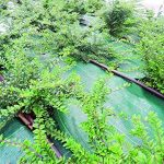 mauvaises herbes rampantes TOP 6 image 3 produit