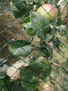 Nutley's Kitchen Gardens FLE07BN5 Filet anti-oiseaux tissé Vert 5 x 6m de la marque Nutley's Kitchen Gardens image 0 produit