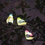 oiseaux solaires TOP 4 image 3 produit