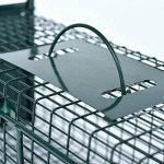 Piège à souris vivants en fil de fer 53 x 19 x 19 cm - 2 entrées, encadrement renforcé avec revêtement par poudre et plaque anti-mosures - Prête à son usage inmédiat de la marque PROHEIM image 3 produit