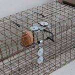 piège cage capture fouines de la marque boite à oeuf image 2 produit