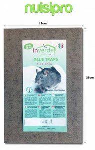 piéger un rat TOP 4 image 0 produit