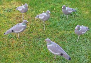 piquet anti pigeon TOP 1 image 0 produit