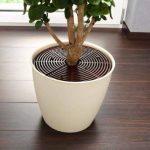 plante anti chat TOP 0 image 1 produit