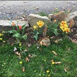 plante anti pigeon TOP 7 image 4 produit