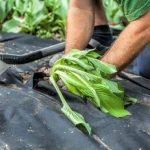 Premium toile/toison anti-mauvaises herbes - 150g/m² - 25m x 1m = 25m² de la marque Proglas GmbH image 4 produit