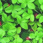 protection des fraises contre les oiseaux TOP 2 image 1 produit