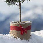 Protection hivernale housse non tissée Windhager, nature, 38 x 150 cm, 300 g/m² de la marque Windhager image 1 produit