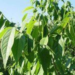 protection jeunes plants TOP 0 image 1 produit
