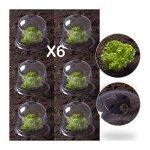 protection jeunes plants TOP 2 image 2 produit