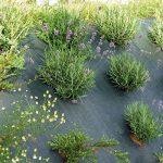 protection jeunes plants TOP 3 image 1 produit