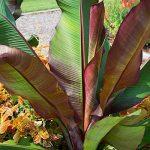 protéger arbre hiver TOP 11 image 1 produit