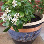 protéger les plantes en pot du froid TOP 0 image 3 produit