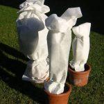 Relaxdays 50 g/m²-dimensions : 1,6 mm x 50 m-résistant aux uV-welt.de housse d'hivernage non tissée pour les plantes de la marque Plant-Protex/Texton image 3 produit