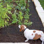 répulsif chat plante TOP 10 image 2 produit
