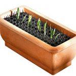 répulsif chat plante TOP 6 image 1 produit