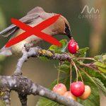 répulsif oiseaux arbres fruitiers TOP 3 image 1 produit
