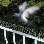 répulsif pigeon naturel TOP 5 image 1 produit