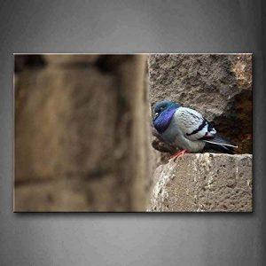 stop pigeon TOP 1 image 0 produit