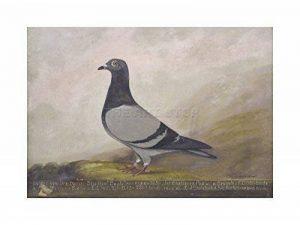 stop pigeon TOP 10 image 0 produit
