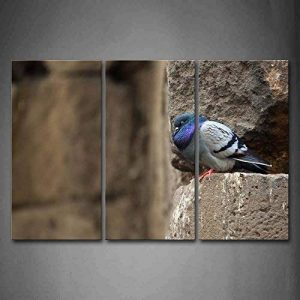 stop pigeon TOP 2 image 0 produit
