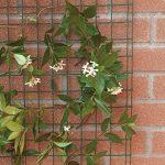Tenax 06854 Grillage pour Plante Grimpante Vert 1 x 5 m de la marque Tenax image 1 produit