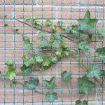 Tenax 06854 Grillage pour Plante Grimpante Vert 1 x 5 m de la marque Tenax image 4 produit