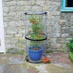 Tierra Garden 50–6070Haxnicks Twist à tomates Cloche de la marque Tierra Garden image 2 produit