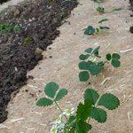 Toile de paillage Herbi'Chanvre - 44cm x 5m - 100% Chanvre naturel 100% Français - Idéal pour potager, jardin carré, plantations de la marque Herbi'Chanvre - Géochanvre image 1 produit
