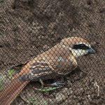 Top-sell 20mx5m prévention anti - oiseau un maillage jardin plantes fruitières cultures protection des arbres de la marque Top-sell image 2 produit