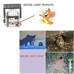 tuer un rat rapidement TOP 3 image 3 produit