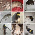 tuer un rat rapidement TOP 9 image 3 produit