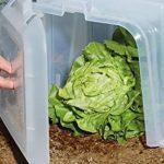tunnel protection pour plantes TOP 10 image 1 produit
