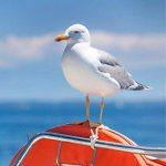 ultrason contre oiseaux TOP 6 image 3 produit