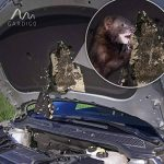 ultrason martre voiture TOP 5 image 4 produit