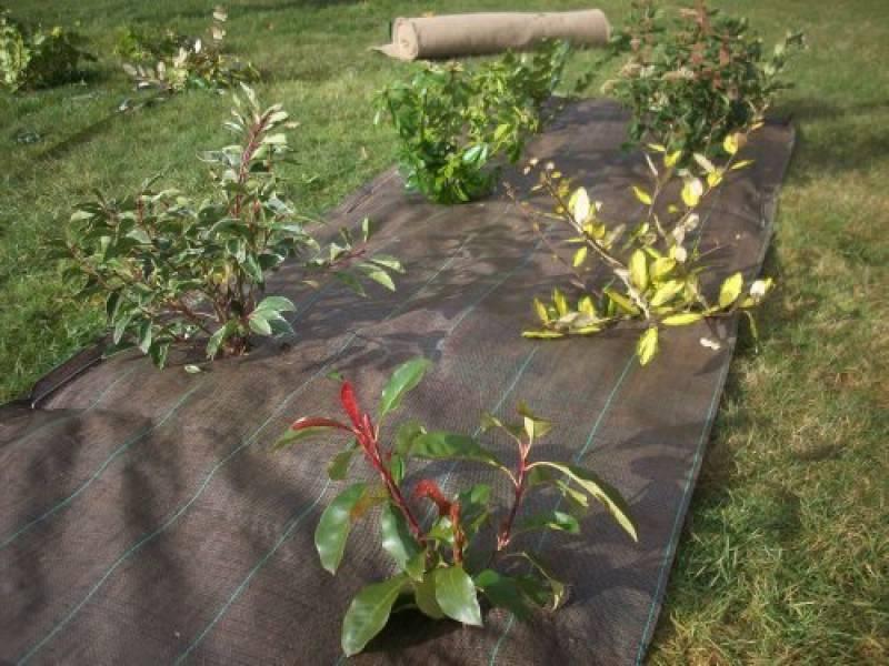 Voile non-tiss/é 120/g//m/² anti-mauvaises herbes ind/échirable pour jardinVoile de protection avec une haute perm/éabilit/é /à l/'eau.
