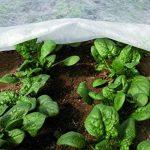 voile protection plantes hiver TOP 10 image 1 produit