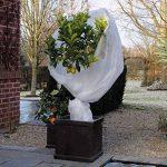 voile protection plantes hiver TOP 6 image 2 produit
