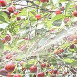 Windhager Filet anti mouche Suzukii protection contre les insectes et les oiseaux pour arbres fruitiers, blanc, 4x 5m, 06778 de la marque Windhager image 3 produit